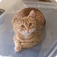 Adopt A Pet :: Daisy - Pasadena, CA