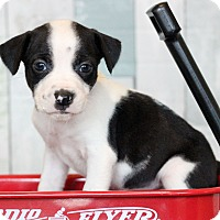 Adopt A Pet :: Nelson - Waldorf, MD