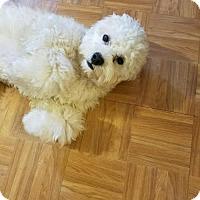 Adopt A Pet :: Mooshie (Friendly, Cuddly!) - Santa Monica, CA