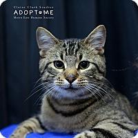 Adopt A Pet :: Sinatra - Edwardsville, IL