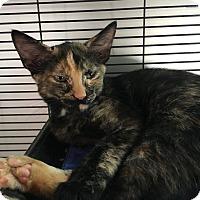 Adopt A Pet :: Vanessa - New Orleans, LA