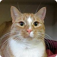 Adopt A Pet :: Devyn - Lloydminster, AB