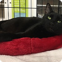 Adopt A Pet :: Jasmine - Richmond, VA