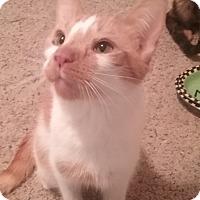 Adopt A Pet :: Ezzma - Cedar Springs, MI