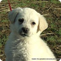 Adopt A Pet :: ARI~Adopted - parissipany, NJ
