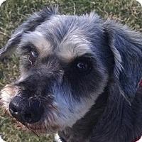Adopt A Pet :: JoJo - Pembroke, GA