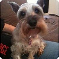 Adopt A Pet :: Heidi - Arlington, TX