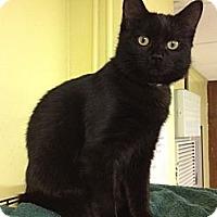 Adopt A Pet :: Brittany - Byron Center, MI