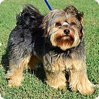 Adopt A Pet :: *Cooper - PENDING - Westport, CT