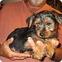 Adopt A Pet :: Spencer - Salem, NH