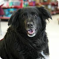 Adopt A Pet :: Murray - Bridgewater, NJ