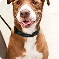 Adopt A Pet :: MINERVA - Beverly Hills, CA