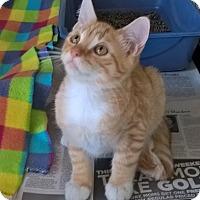 Adopt A Pet :: Norbit - Island Park, NY