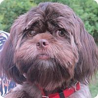 Adopt A Pet :: Mocha Latte - Allentown, PA