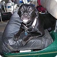 Adopt A Pet :: Lucy - Morriston, FL
