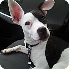 Adopt A Pet :: Boogie