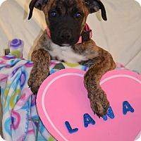 Adopt A Pet :: Lana - Albemarle, NC