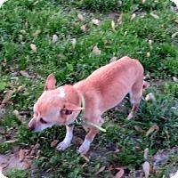 Adopt A Pet :: Rudy - Glastonbury, CT