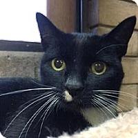 Adopt A Pet :: Allana - Phoenix, AZ