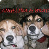 Adopt A Pet :: ANGELINA & BRAD - Ventnor City, NJ