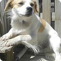 Adopt A Pet :: Ethan-ADOPTION PENDING - Boulder, CO
