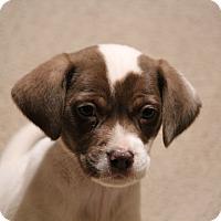 Adopt A Pet :: Sonny - Yadkinville, NC