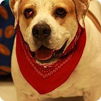 Adopt A Pet :: Dozer - Twin Falls, ID