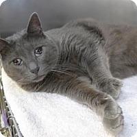 Adopt A Pet :: Pax 33691763 - Westampton, NJ