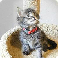 Adopt A Pet :: Alastor - Davis, CA