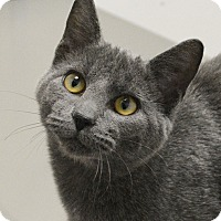 Adopt A Pet :: Tinsel - Springfield, IL