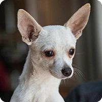Adopt A Pet :: Bernie - Matthews, NC