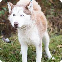 Adopt A Pet :: Savannah - Louisville, IL