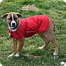 Adopt A Pet :: Puppy Sissy - Adoption Pending