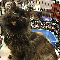 Adopt A Pet :: Montana - Hamilton, ON