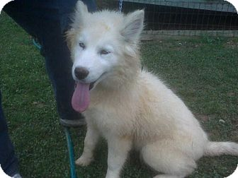 Adopt A Dog Derry Nh