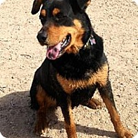 Adopt A Pet :: Bernie/Courtesy Posting - Tucson, AZ