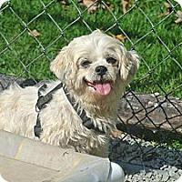Adopt A Pet :: Carrie - Hop Bottom, PA