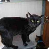 Adopt A Pet :: Bruce - Hamburg, NY