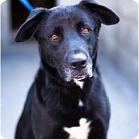 Adopt A Pet :: Brownie - Los Angeles, CA