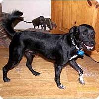 Adopt A Pet :: Taco - Scottsdale, AZ