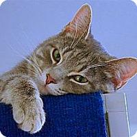 Adopt A Pet :: Capo - Victor, NY