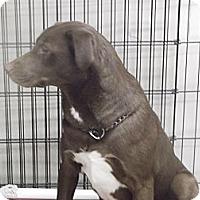 Adopt A Pet :: HARLEY LYNN - Coudersport, PA