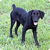 Adopt A Pet :: Maureen (Mo) - Richmond, VA