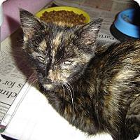 Adopt A Pet :: Heidi - Mundelein, IL