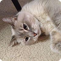 Adopt A Pet :: Mon Soleil - Fairbury, NE