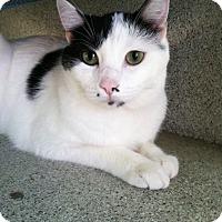 Adopt A Pet :: Blake - Newport Beach, CA