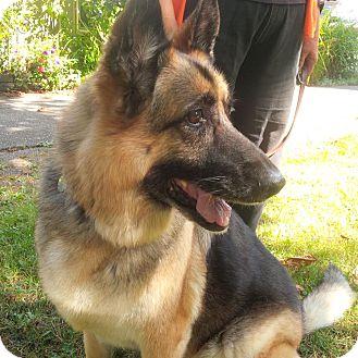Black Dog Rescue Surrey Bc