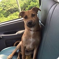 Adopt A Pet :: Shadow - Burlington, NJ