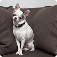 Adopt A Pet :: Eddie - Drumbo, ON