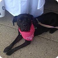 Adopt A Pet :: Jada - Pennsauken, NJ
